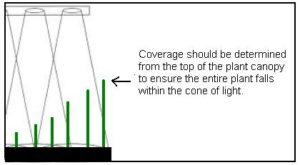 Grow Bulbs To Light Entire Room