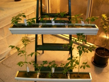 Garden In Your Gutters Garden Amp Greenhouse