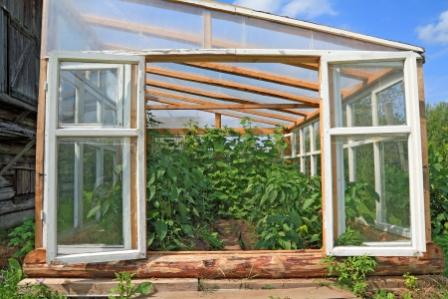 Greenhouse with Windows Open for Ventilation