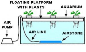 Deep Walter Culture Hydroponics System
