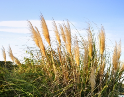 Tips and timing for cutting back ornamental grass garden greenhouse gardening should be kept simple and easy and cutting back ornamental grass is no exception it doesnt have to be a difficult daunting task workwithnaturefo