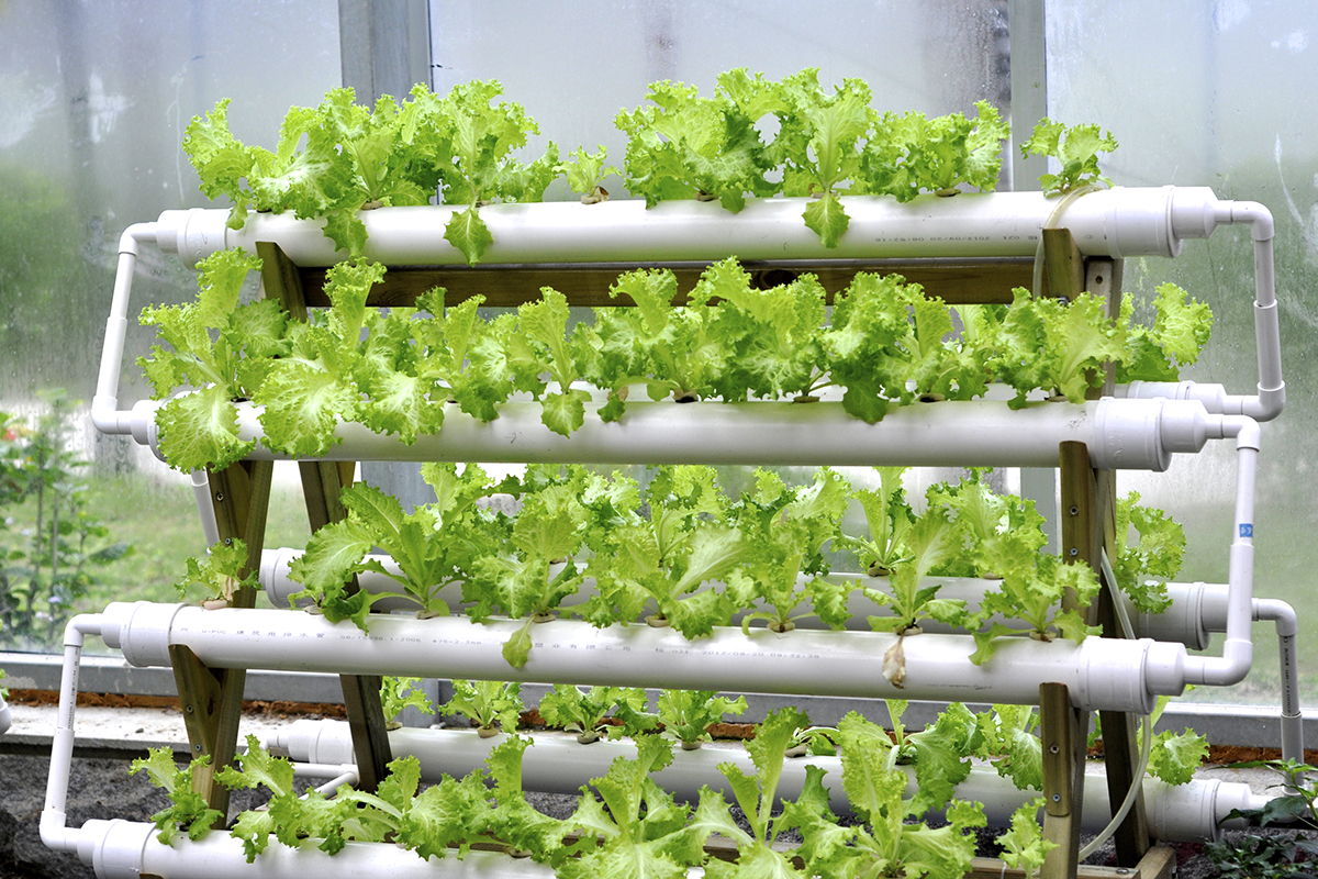 Hydroponic Systems In A Greenhouse Garden Amp Greenhouse