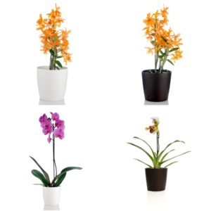Orchid Container