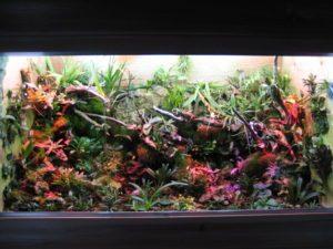 orchids-in-terrarium