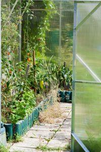interior-of-polycarbonate-greenhouse