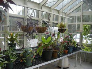 less-plants