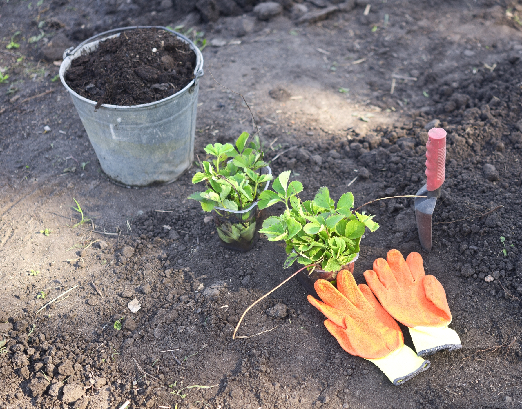 Building an organic soil from scratch garden greenhouse for Soil articles