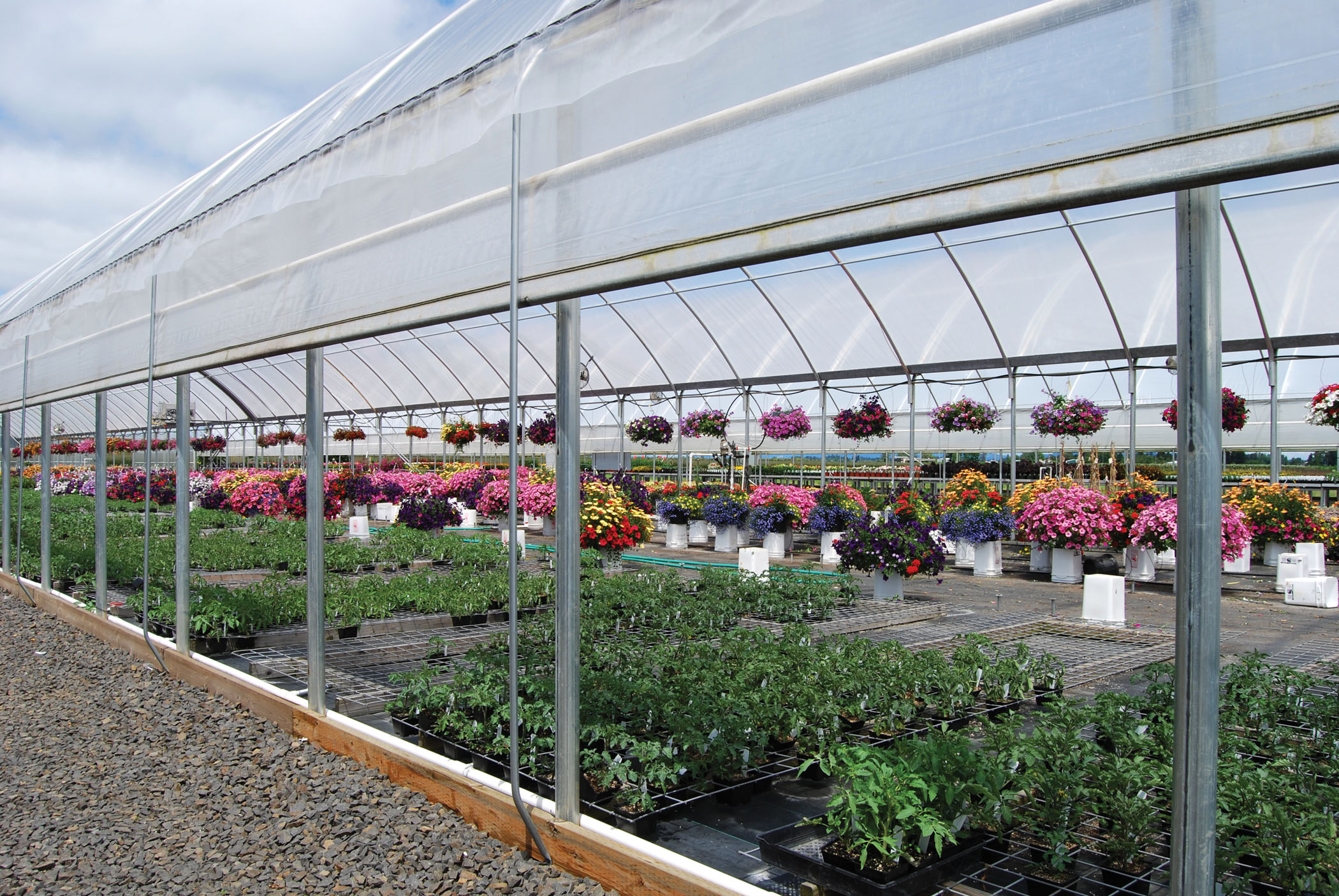 Commercial Greenhouses Garden Amp Greenhouse