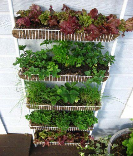Выращивание зелени в коробах 27