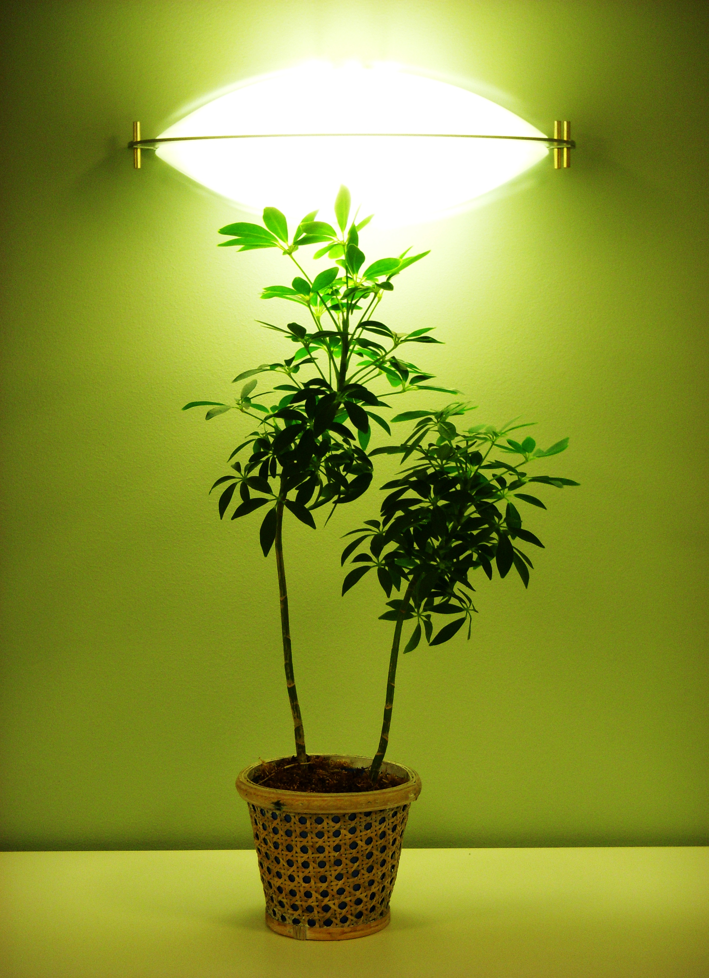 Artificial Light For The Greenhouse Garden