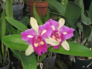 Natural Mite and Pest Control Options for Your Orchids