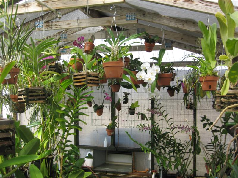 Just What is An Orchid and Then Some - Garden & Greenhouse