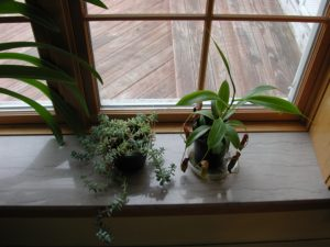 GGwindowsill