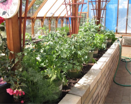 Growing Vegetables In A Greenhouse Garden Amp Greenhouse