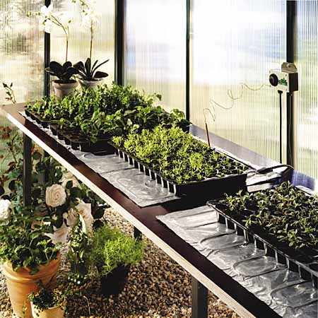 Greenhouse Gardening For Beginners Winter