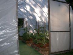 GreenhouseTom
