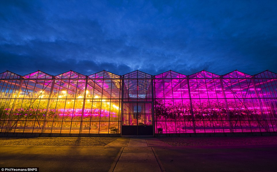 Are Led Grow Lights Best Garden Amp Greenhouse