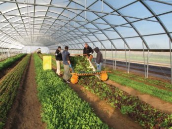 Growers Supply High Tunnel Greenhouse