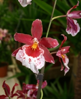 7 Ways To Guarantee Healthy Orchids Garden Greenhouse