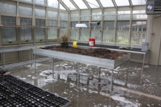 Greenhouse Being Cleaned