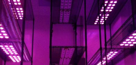 Understanding Watts As They Relate To Led Grow Lights