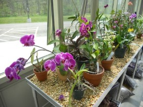 Gravel Bench for Orchid Greenhouse