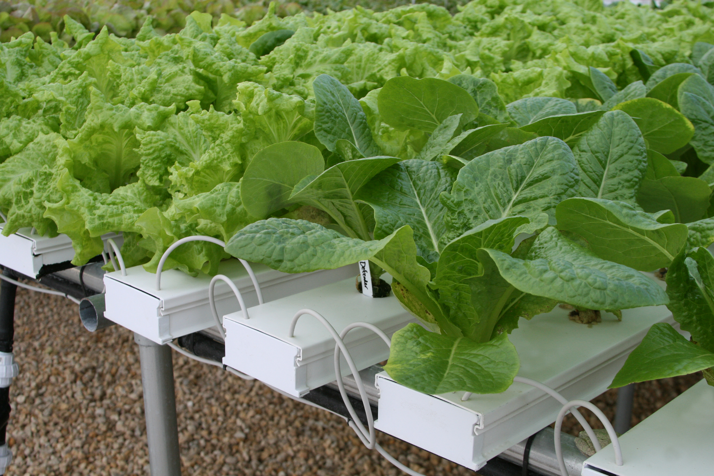 Hydroponics Is As Easy As Nft Garden Amp Greenhouse