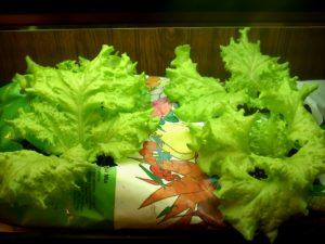 lettuceinabag 2