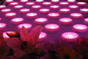 LGM LED Grow Lights are modular. Make as large or as small of an array as you need for your growing area.