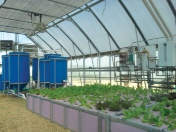 Growers Supply Aquaponics Sysem