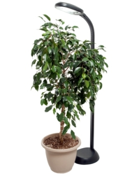 Hydrofarm Standing Plant Light