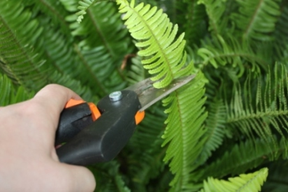 Hand Pruner for Greenhouse