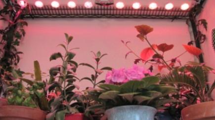 LED Lights Over Plants