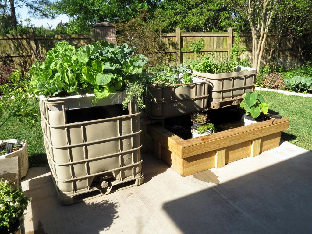 Aquaponics: From Fish to Fertilizer - Garden & Greenhouse