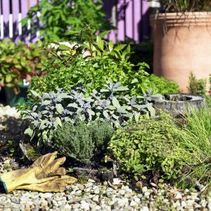 Thankfully, Planning The Layout Of Your Herb Garden Is Not Rocket Science.  A Successful Herb Garden Layout Is Relatively Simple And Does Not Require A  Lot ...