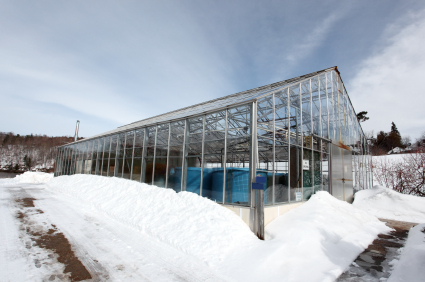 Growing Greenhouse Vegetables During Winter Garden