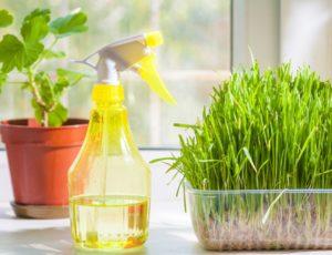 Herbs by Window