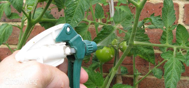 Foliar Feeding For Plants Garden Amp Greenhouse