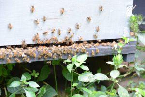 Creating a Bee Friendly Environment - Garden & Greenhouse