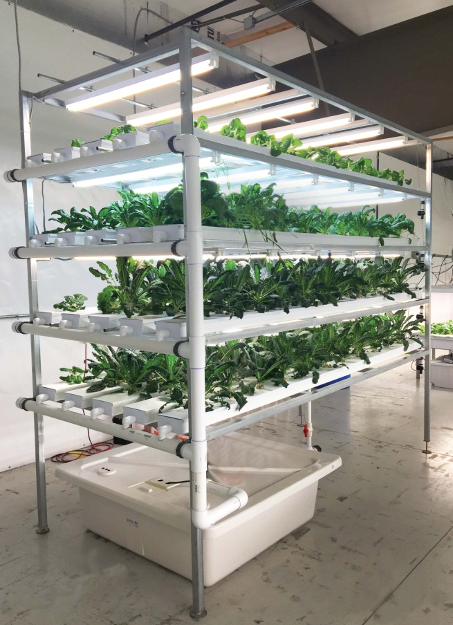 Commercial Grow Room Design: New Vertical NFT Hydroponic System