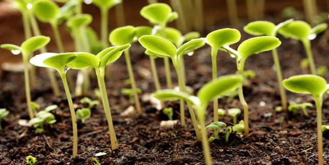 organic vs conventional cloning garden greenhouse. Black Bedroom Furniture Sets. Home Design Ideas