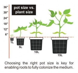 Keys For Transplanting Try To Stage Pot Size Ropriately
